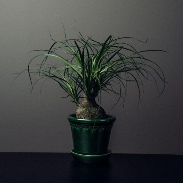 Københavner potte Ø18, emerald